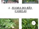 Libro de prantas do rio Caselas-1