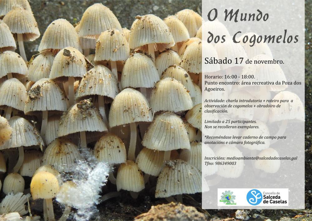 O_mundo_dos_Cogomelos_ Salceda_2018_1000x708